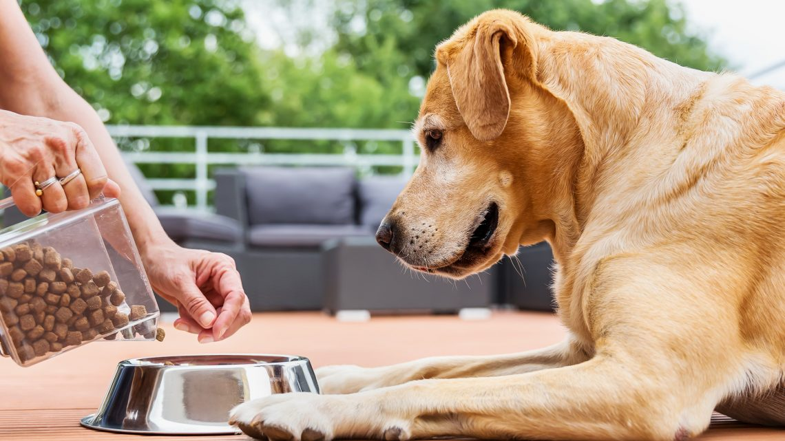 How To Buy Dog Food?